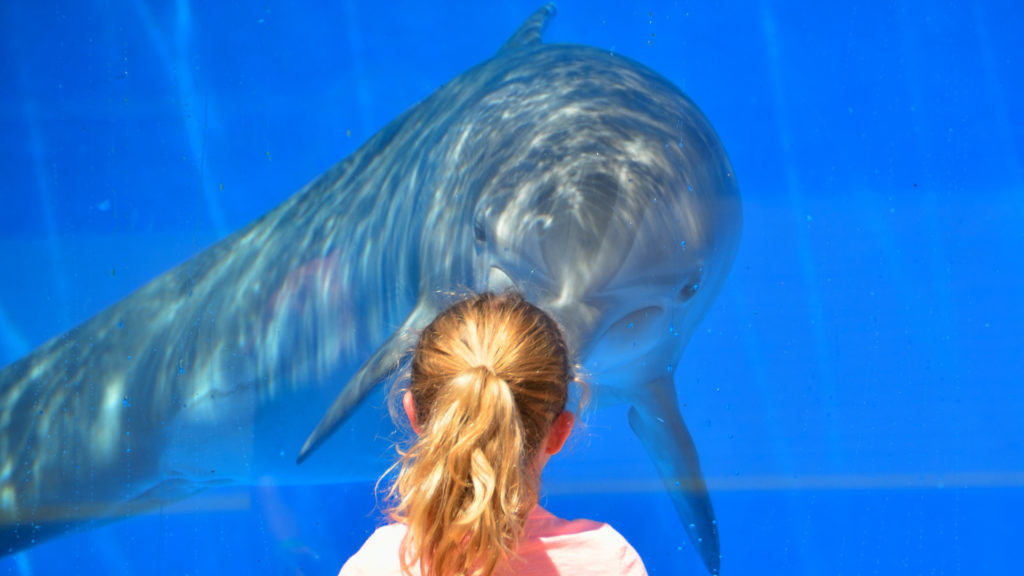 Dauphin en aquarium devant une fillette