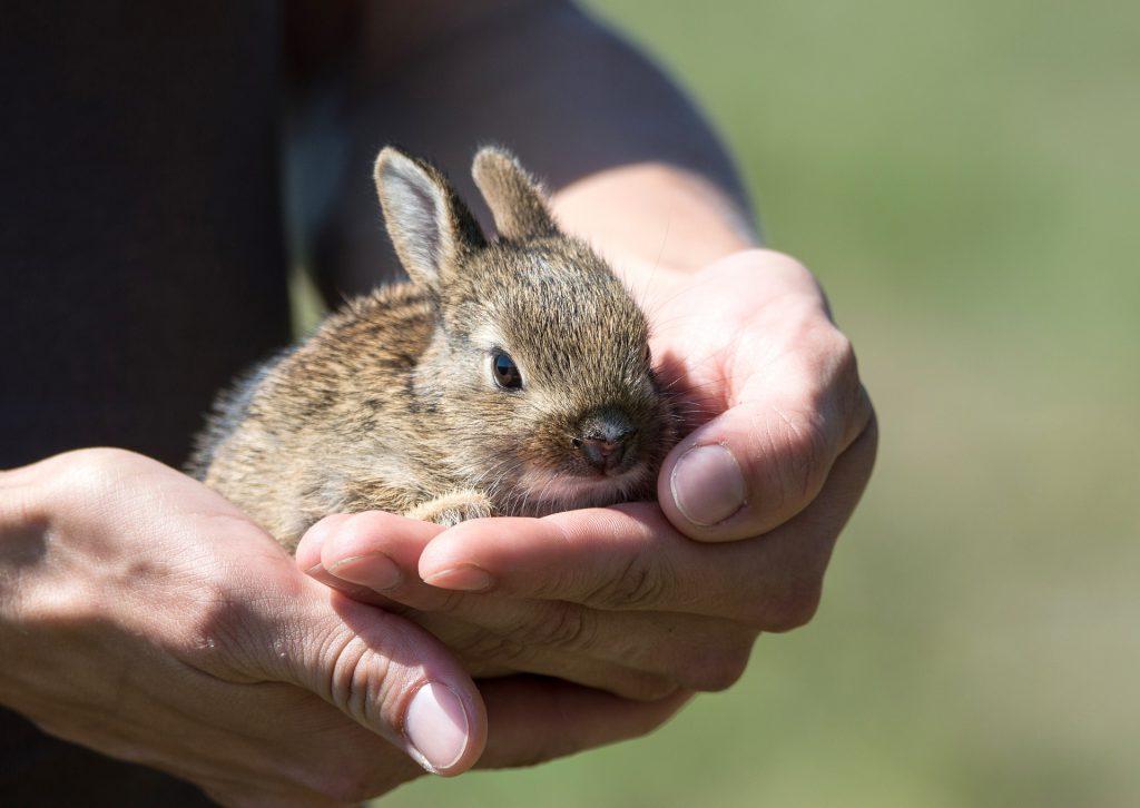 Préserve le vivant - sauvetage lapin