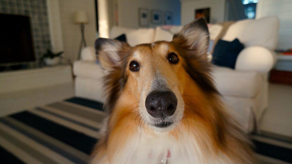 Le chien, un animal curieux