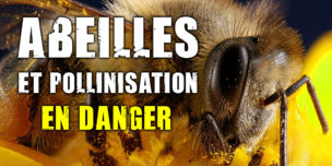 Abeilles et pollinisation : un service écosystémique menacé