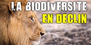 Biodiversité : la sixième extinction de masse a commencé